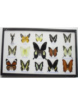 Real 15 Beautiful Framed Butterflies Art Collections In Glass From Thailand Taxidermy