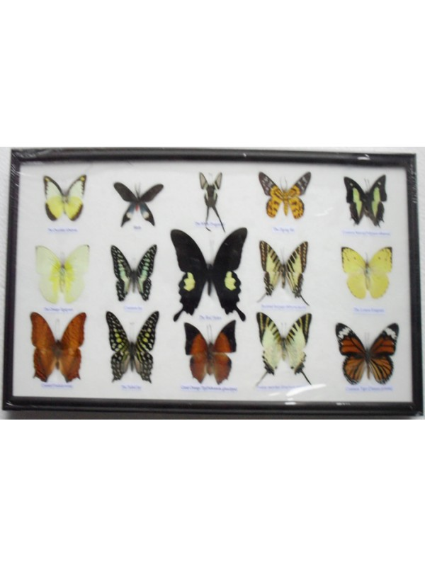 Real 15 Beautiful Framed Butterflies Art Collections In Glass From ...