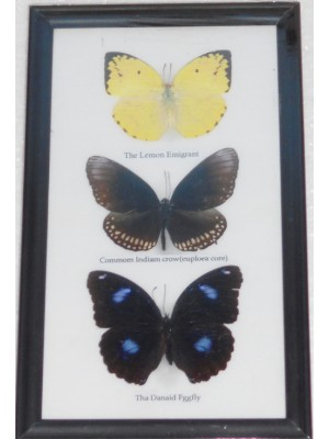 Real 3 Butterflies Wall Decor Housewares Collectible TAXIDERMY Framed
