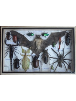 REAL Multiple INSECTS BEETLES Spider Leaf Insect Bat Collection in wooden box
