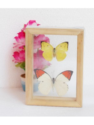 Real Mixed Couple Butterflies Taxidermy Double Glass Frame For Gift Collectibles
