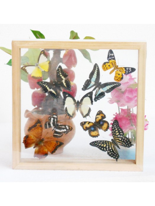 REAL mixed BUTTERFLIES Taxidermy Double Glass in Frame